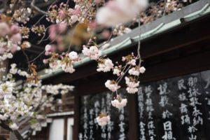 ICAIMA Massage Bien-être Japonais du visage